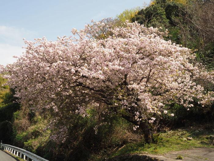 朝日山登山_c0116915_23202966.jpg