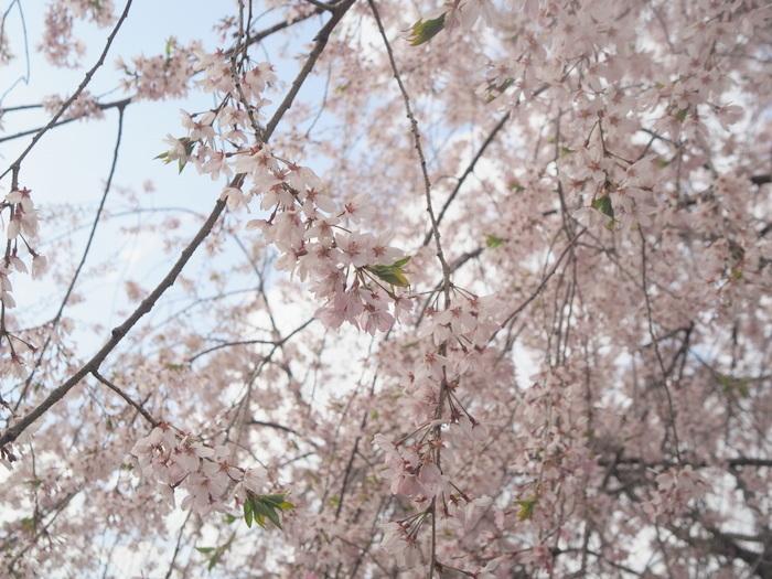 朝日山登山_c0116915_23445143.jpg
