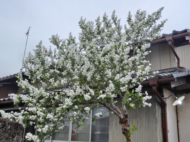 西慶寺の春_e0390829_21081436.jpg