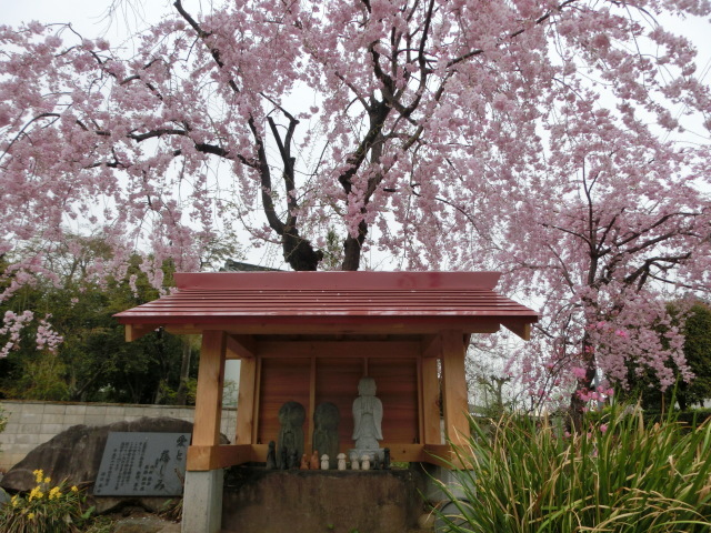 西慶寺の春_e0390829_21084092.jpg