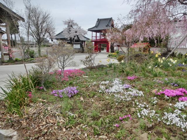 西慶寺の春_e0390829_21095865.jpg