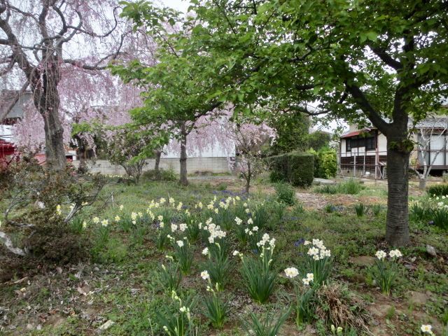 西慶寺の春_e0390829_21102632.jpg