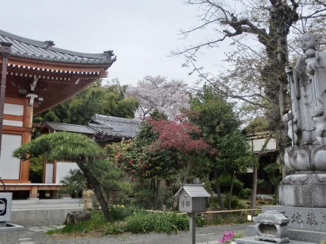 西慶寺の春_e0390829_21111086.jpg