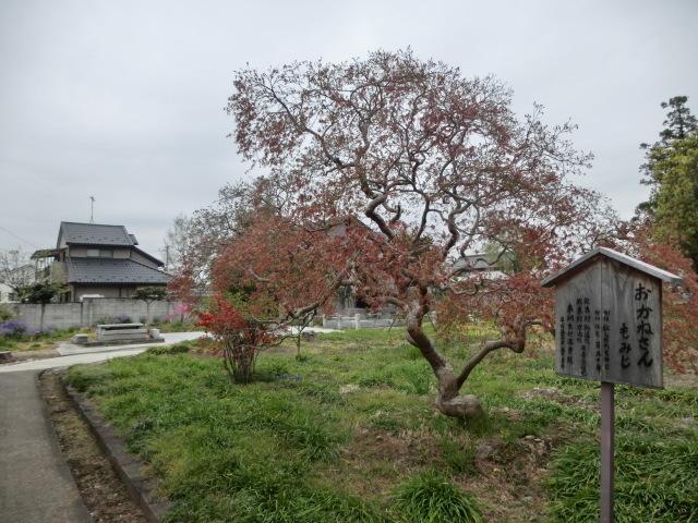 西慶寺の春_e0390829_21113040.jpg