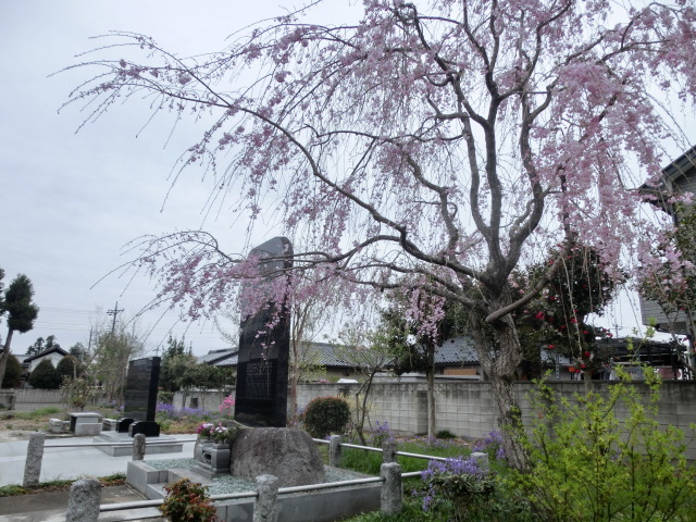 西慶寺の春_e0390829_21121521.jpg