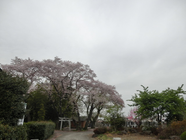 西慶寺の春_e0390829_21123640.jpg