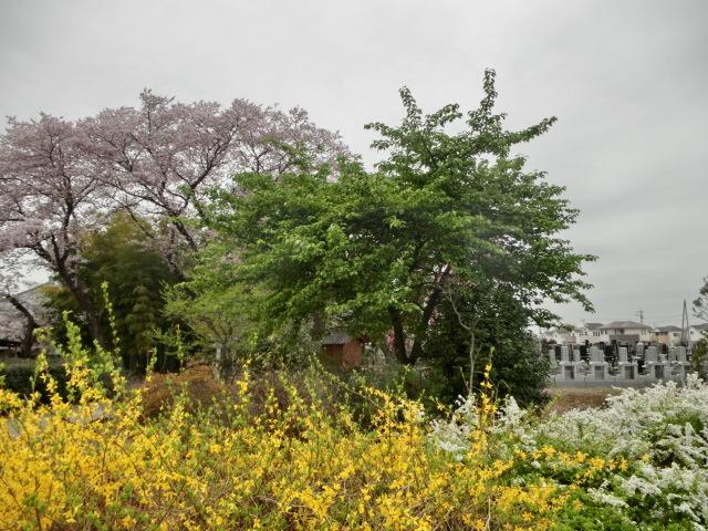 西慶寺の春_e0390829_21133745.jpg