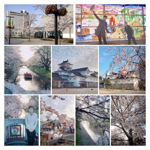 桜🌸_c0350839_11124428.jpeg