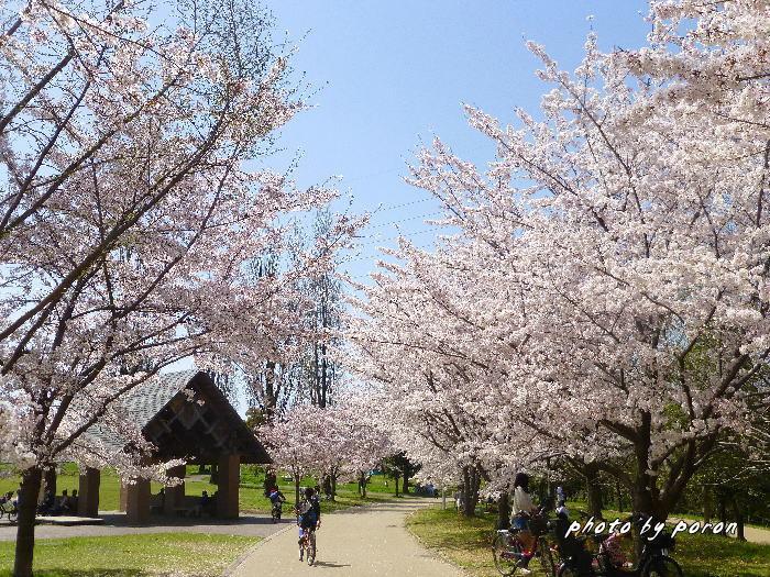 桜開花と芽吹きの季節_c0137342_19493871.jpg