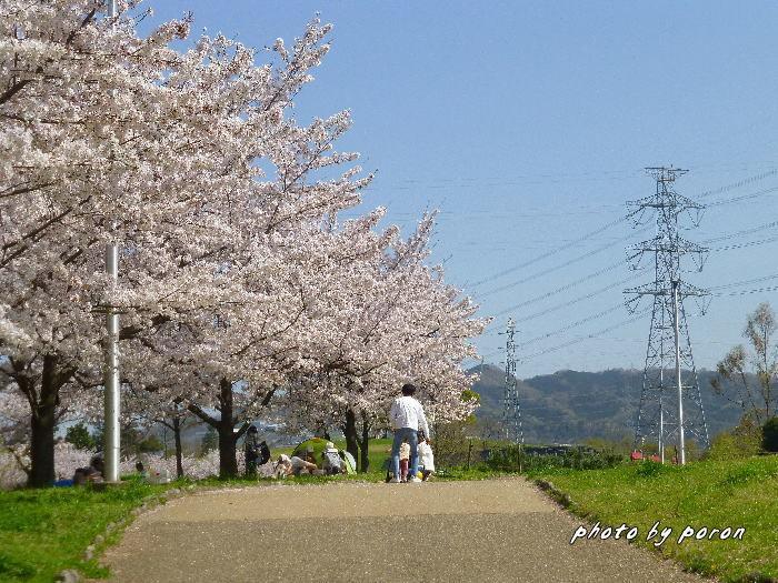 桜開花と芽吹きの季節_c0137342_19571538.jpg