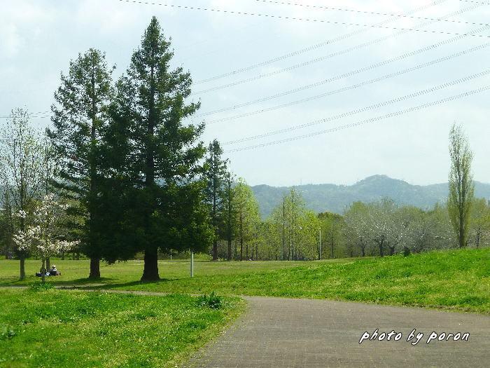 桜開花と芽吹きの季節_c0137342_20124321.jpg