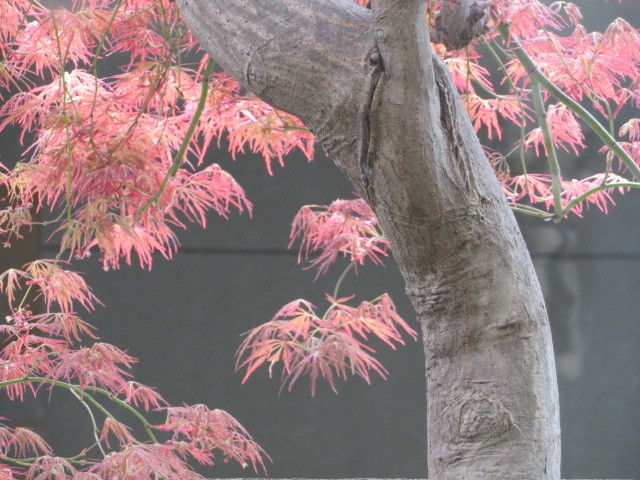 桜並木の散策コース・東京(竹の塚)~埼玉草加市(谷塚)界隈_f0329849_17020475.jpg