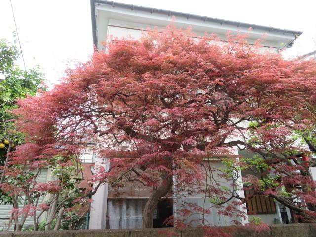 手向山(タムケヤマ)紅葉を活ける_f0329849_17033012.jpg