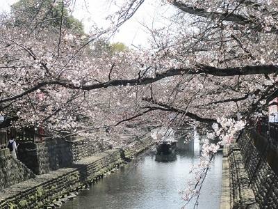 2021年の桜(1)-水門川沿い-_f0197754_00165531.jpg