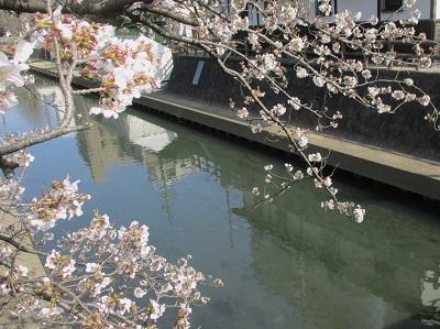 2021年の桜(1)-水門川沿い-_f0197754_00170192.jpg