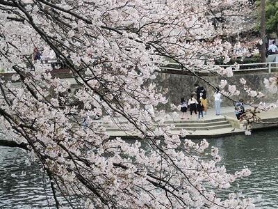 2021年の桜(1)-水門川沿い-_f0197754_00215806.jpg