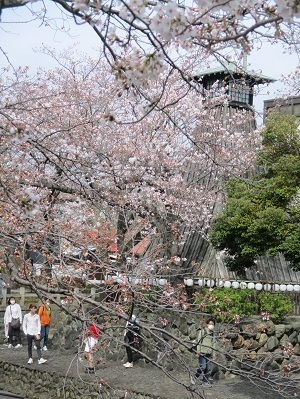 2021年の桜(1)-水門川沿い-_f0197754_00220267.jpg