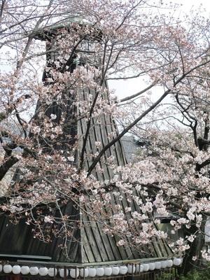 2021年の桜(1)-水門川沿い-_f0197754_00220596.jpg