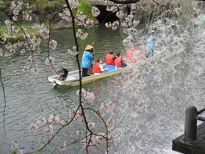 2021年の桜(1)-水門川沿い-_f0197754_00221096.jpg