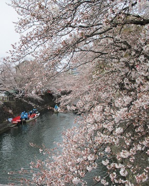 2021年の桜(1)-水門川沿い-_f0197754_00221461.jpg