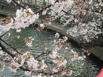 2021年の桜(1)-水門川沿い-_f0197754_00222053.jpg