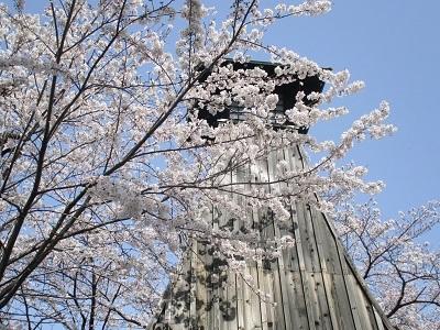 2021年の桜(1)-水門川沿い-_f0197754_00253340.jpg