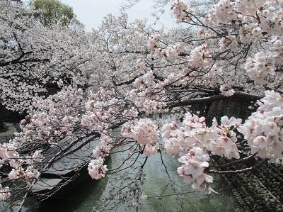2021年の桜(1)-水門川沿い-_f0197754_00253535.jpg