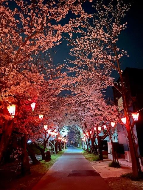 常石神社 桜_f0059665_15411802.jpg