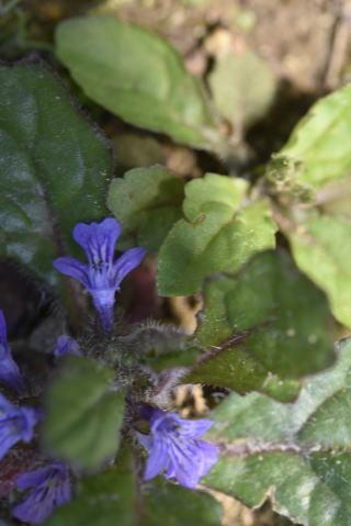 小さな花たち_b0189573_13245819.jpg