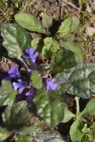 小さな花たち_b0189573_13274184.jpg