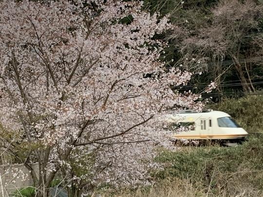 近鉄と桜_f0266284_21590549.jpeg