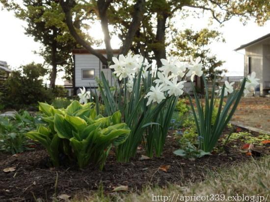 庭に咲いた宿根草と球根の花 2021年4月上旬_c0293787_17075855.jpg