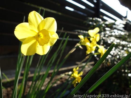 庭に咲いた宿根草と球根の花 2021年4月上旬_c0293787_17093196.jpg
