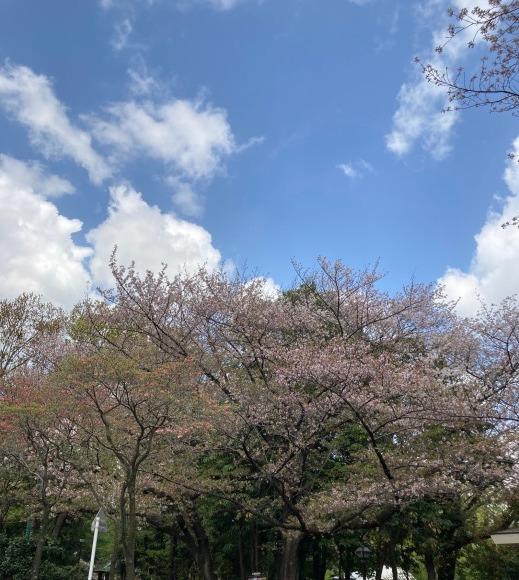 サクラの季節が去っていく・・BY:加藤_e0045587_21244526.jpg