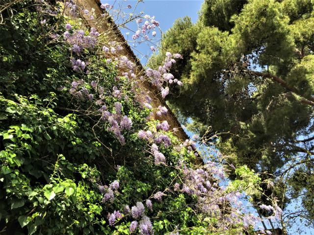 春うらら_b0064411_07260857.jpg