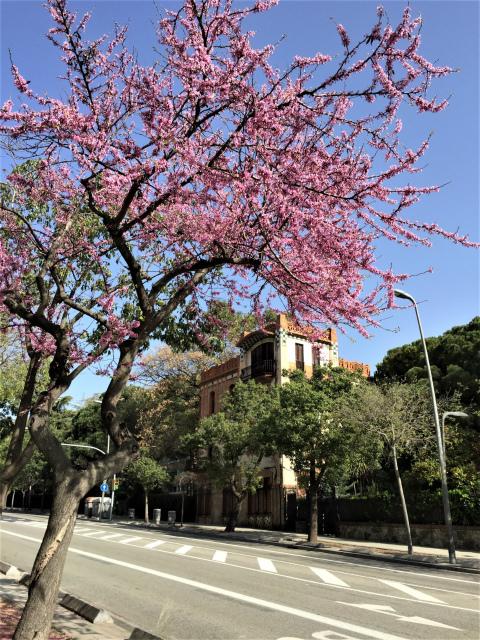 春うらら_b0064411_07260865.jpg