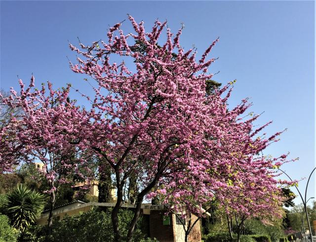 春うらら_b0064411_07260930.jpg
