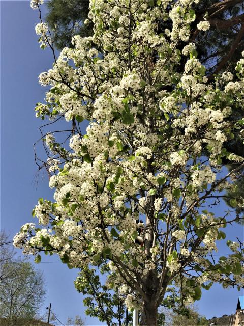 春うらら_b0064411_07260955.jpg