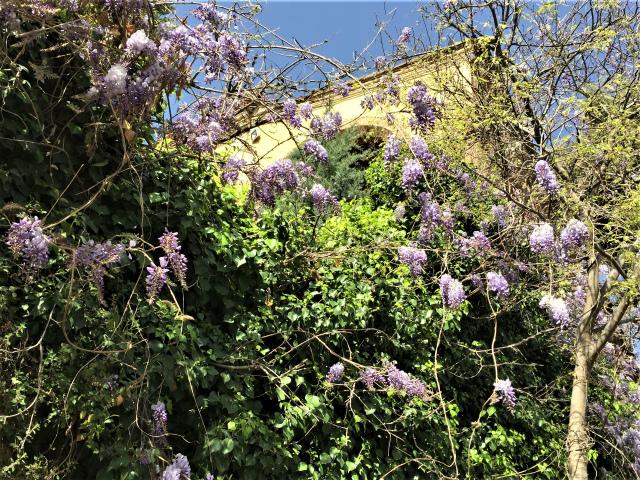 春うらら_b0064411_07294917.jpg