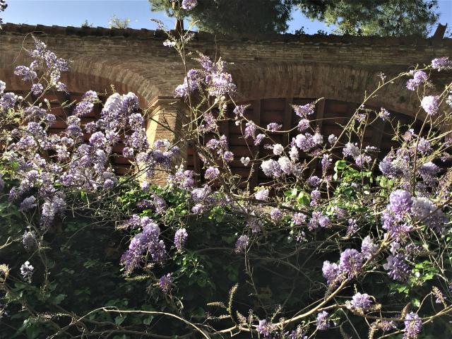春うらら_b0064411_07295406.jpg