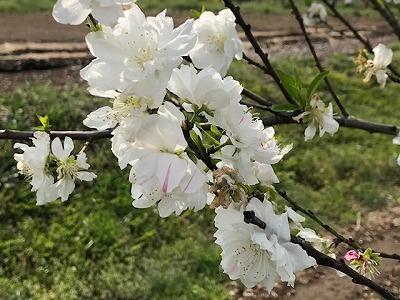 里山公園4月初旬_e0373815_16274951.jpg