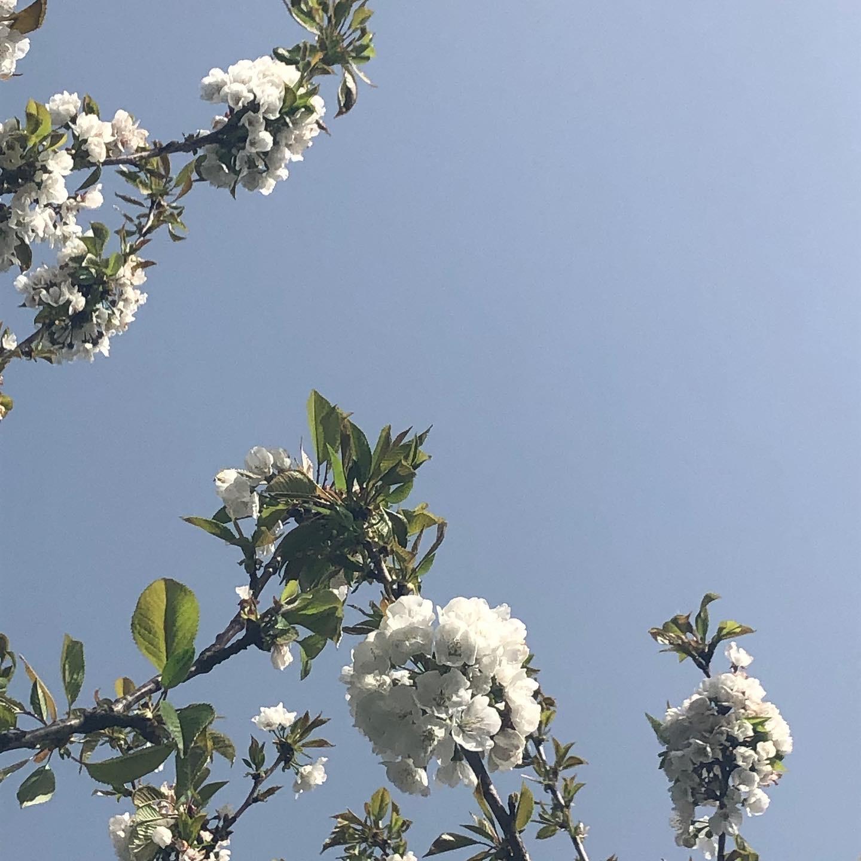 春到来とロックダウン再び L\'arrivée du printemps et le 3ème confinement_e0243221_21575042.jpg