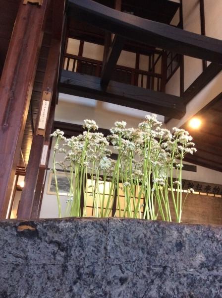 「芭蕉の館」の春③_f0289632_10382397.jpg