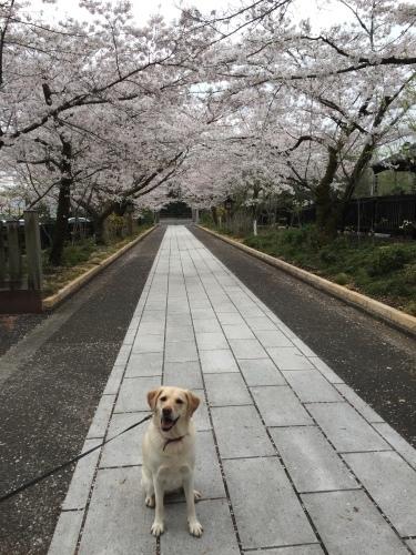 お花見散歩_c0331145_21025010.jpg