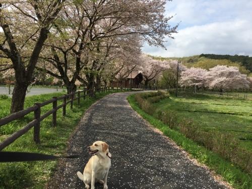 お花見散歩_c0331145_21030116.jpg