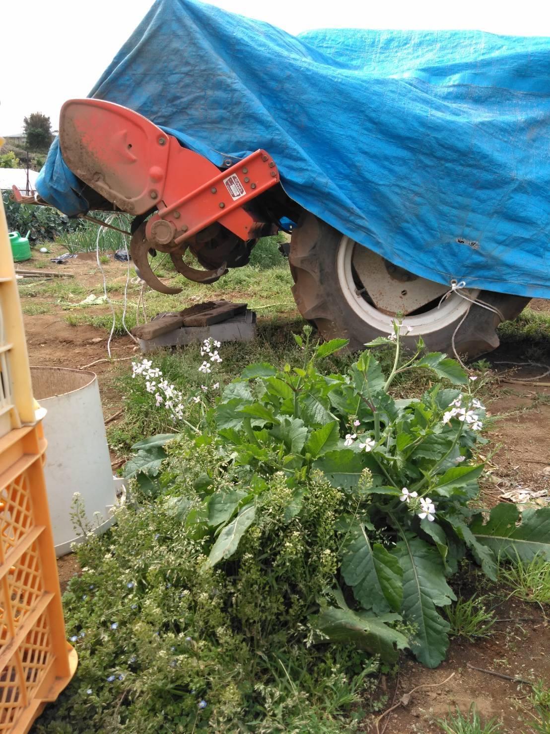 トマト達の鉢上げ終了です_c0222448_13562344.jpg