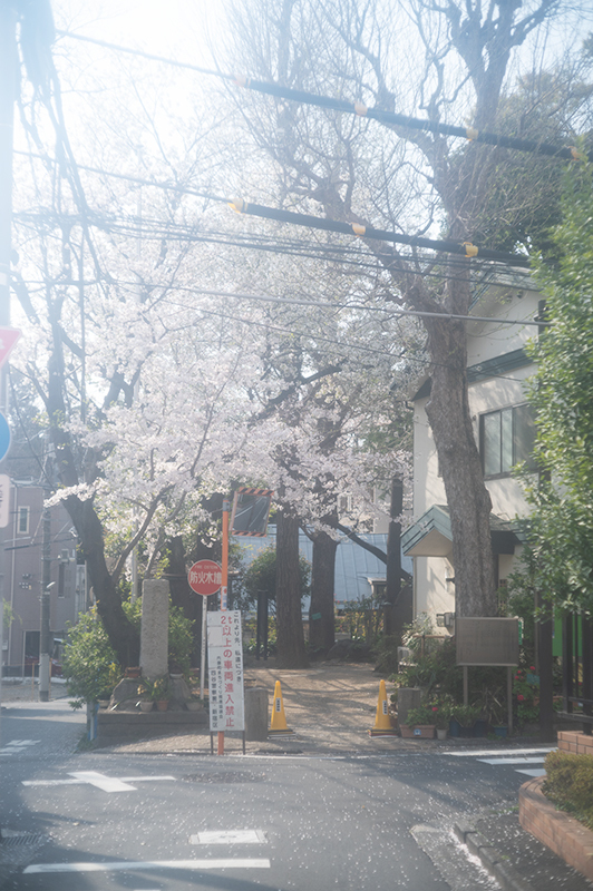 Hello from Tokyo 153 新宿御苑の桜_a0003650_22240065.jpg