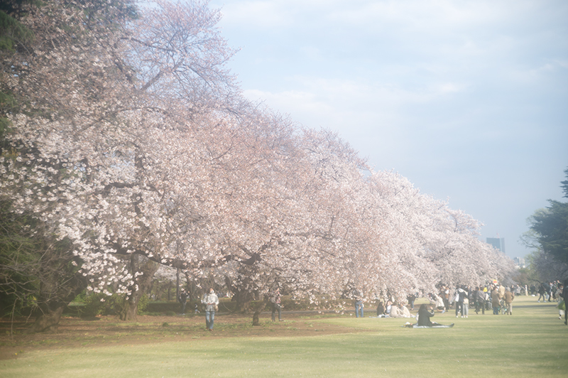 Hello from Tokyo 153 新宿御苑の桜_a0003650_22261407.jpg
