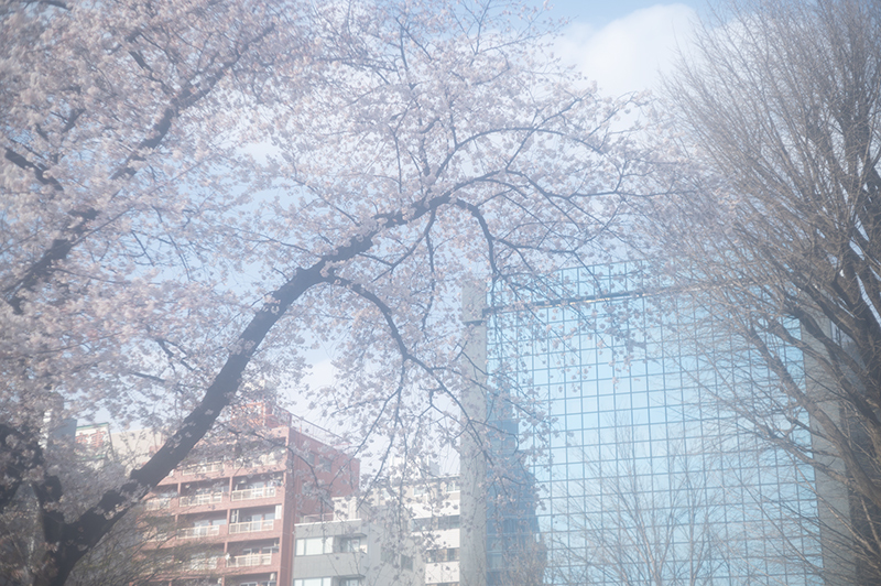 Hello from Tokyo 153 新宿御苑の桜_a0003650_22270552.jpg