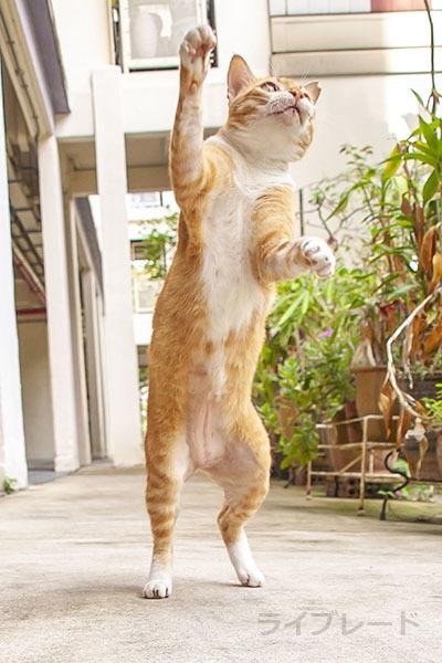 ご近所猫 2021.03.31_f0112152_20491624.jpg